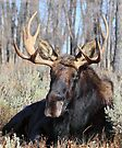 Sitting Bull. (Jackson Wyoming) by Ann  Van Breemen