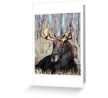 Sitting Bull. (Jackson Wyoming) Greeting Card