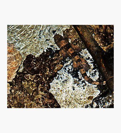 Spot Photographic Print