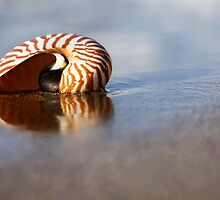 Beached Nautilus by Alex  Bramwell