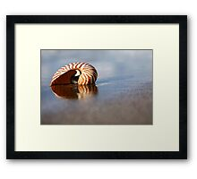 Beached Nautilus Framed Print