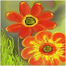 Orange flowers by Sarah Curtiss
