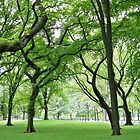 Summer in Central Park by MarkChambers