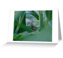 Small little bug Greeting Card