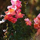 Snapdragons by Dana Roper