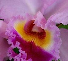 Orchids from My Garden by Erica Long