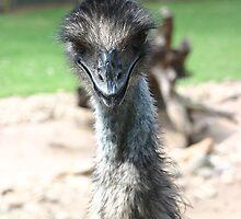 Emu - Featherdale Wildlife Park by shmoo
