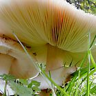 giant fungi by tego53