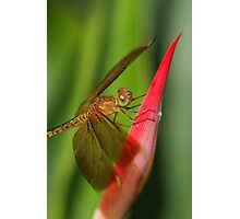 Enter The Dragon(Fly) Photographic Print