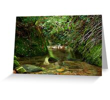 Coachwood Glen - Megalong Valley NSW Greeting Card