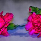 Pink by artsthrufotos