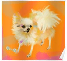 Dog Chihuahua Orange Poster