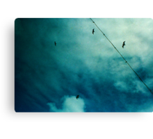 four little birds Canvas Print