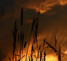Sunset in the field. by demigod