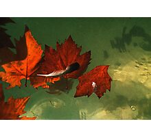 five red leaves Photographic Print
