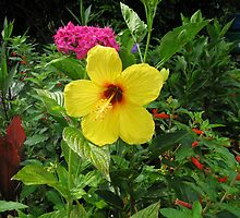 Yellow Hibiscus by aura2000