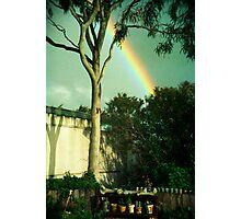 six little pot plants Photographic Print