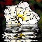 Floating Rose by Trevor Kersley