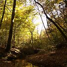 Autumn Creek by Edyth Counter-Griffis