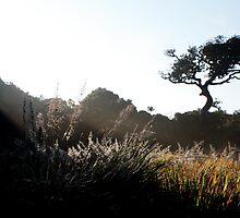 Sunrise, Horton Plains by jenheal