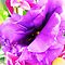 *Feature Page/Purple Shade, One full flower - Enchanted Flowers*
