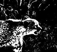 Cheetah Stalker by beltanemaiden
