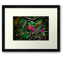...Pinky... Framed Print