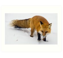 Foxx Art Print