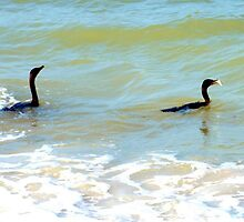 Cormorants' catch by ♥⊱ B. Randi Bailey