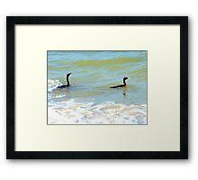 Cormorants' catch Framed Print