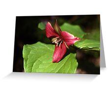 Purple Trillium (Trillium erectum) Greeting Card