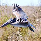 Pelican in flight by Irvin Le Blanc