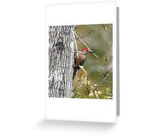 Red Bellie WoodPecker Greeting Card