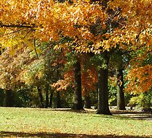 Fall in the City by Carol Smith