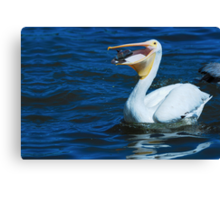 It's a Wild Life Canvas Print