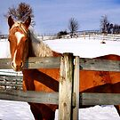Horse in Winter by Nadya Johnson