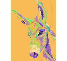 Color Donkey Photographic Print