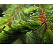 In A  Lush Green World Photographic Print