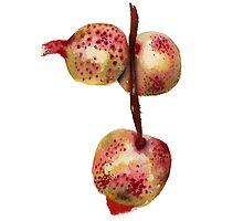 Fruity 6 by JenniferCortois