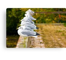 Seagulls-Lake Champlain Canvas Print