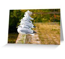 Seagulls-Lake Champlain Greeting Card