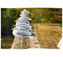 Seagulls-Lake Champlain Poster