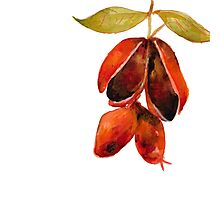 Fruity 7 Photographic Print
