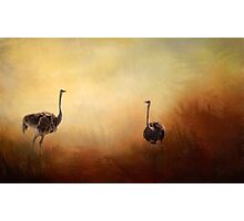 Mr & Mrs Ostrich! Photographic Print