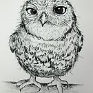 Owly 2 by Sally Ford