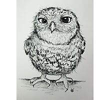 Owly 2 Photographic Print