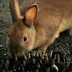 Hare by terrebo