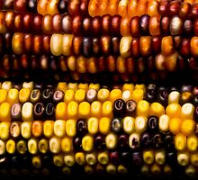 Colorful Corn on the cob Abstract fne Art Print by Bo Insogna
