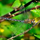 Dragonfly & Colours by NaturesEarth