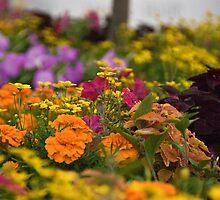 Coleus, Petunias, Merigolds and Dasies by Kent Burton